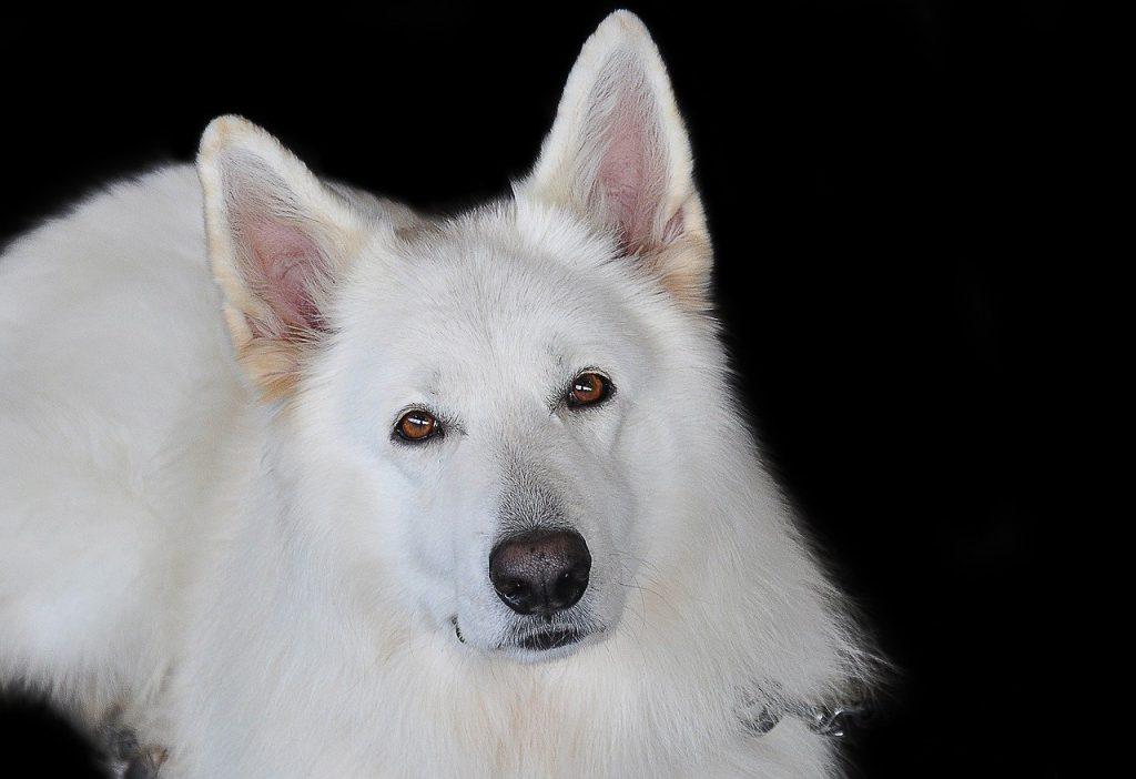 マヤ暦「白い犬」の使命・相性・恋愛特性は?
